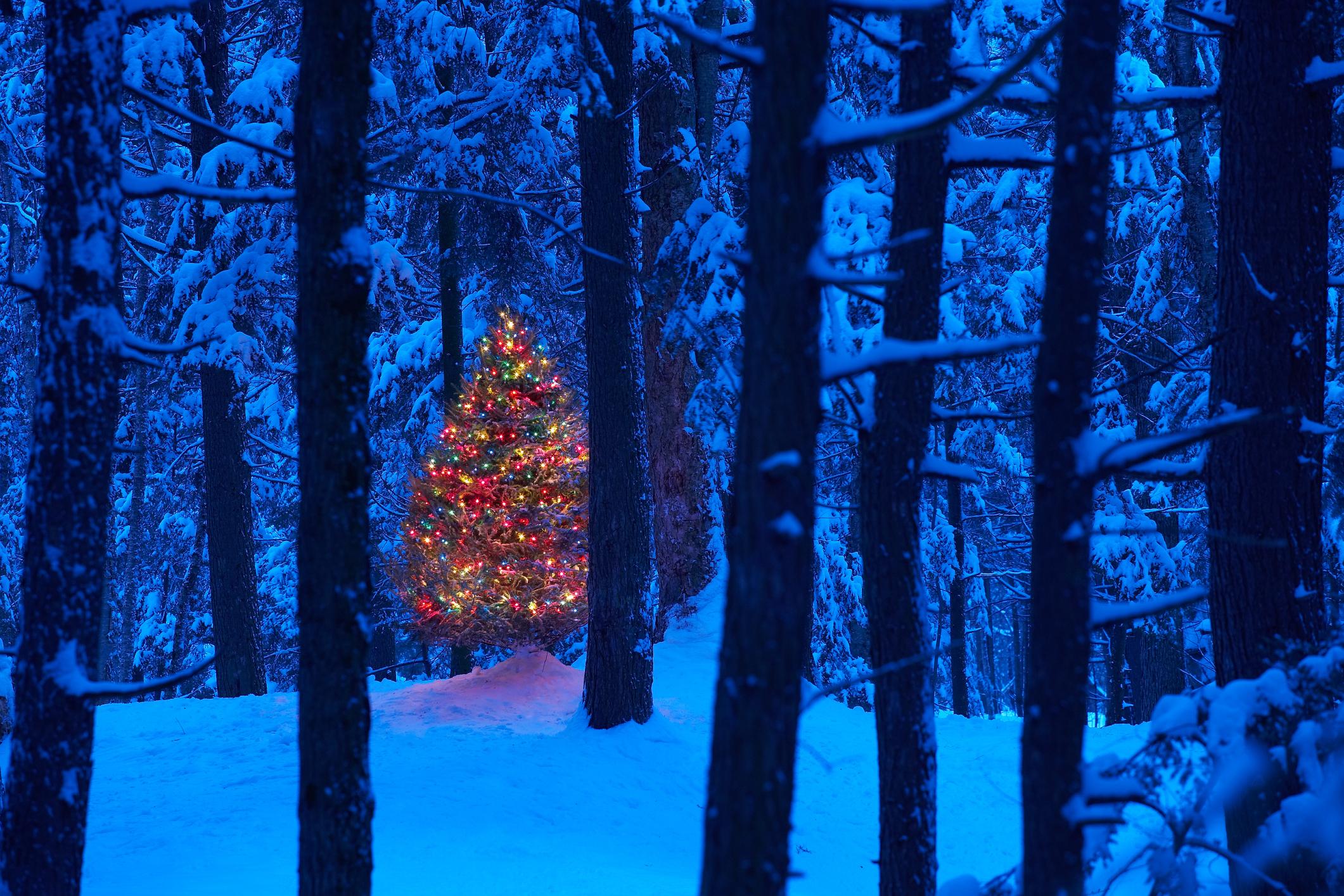 christmas in the woodsjpg LgRg1R4A